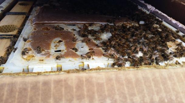 2-15 inside hive