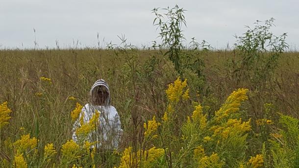 Tall prairie. Short beekeeper.